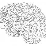 Big-Brain-Maze