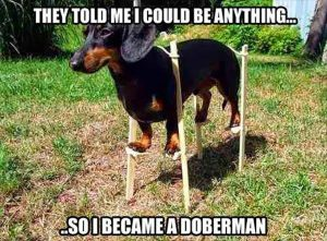 They told me I could become anything so I became a Doberman